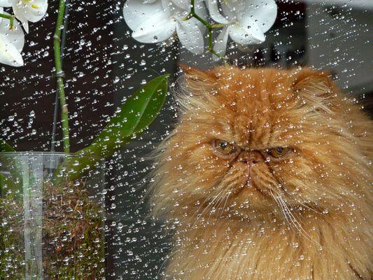 bei Regen bekomm ich schlechte Laune...