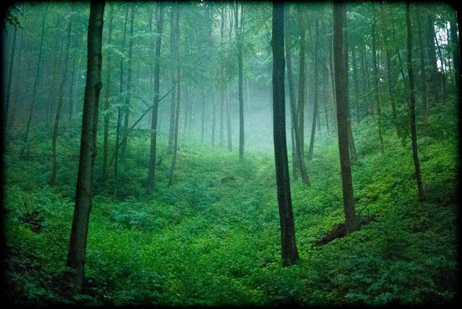 Bei Regen im Wald