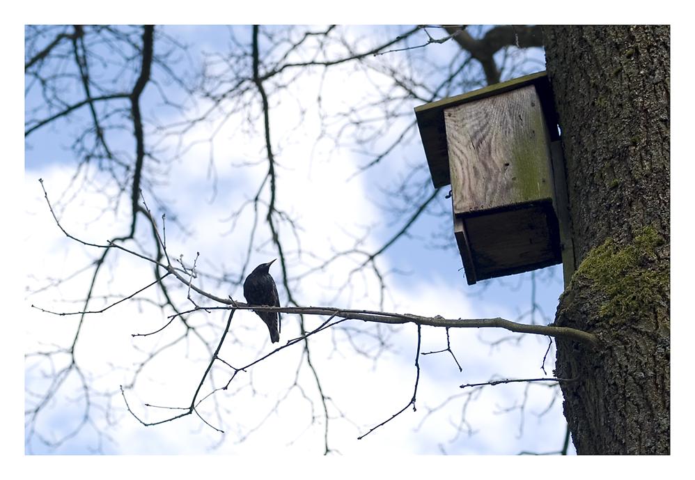 Bei schönem Wetter kann man auch Vögel auf ihrer Terrasse antreffen....