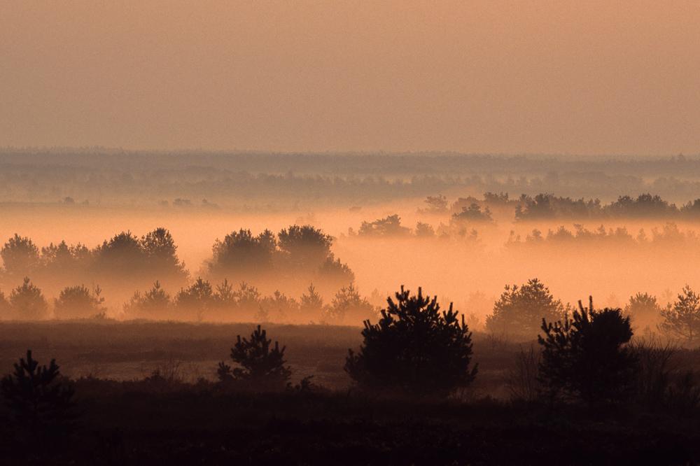 Bei Sonnenaufgang in der Südheide