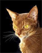 Bei uns gibt´s noch andere Katzen ausser Claus Dieter ...