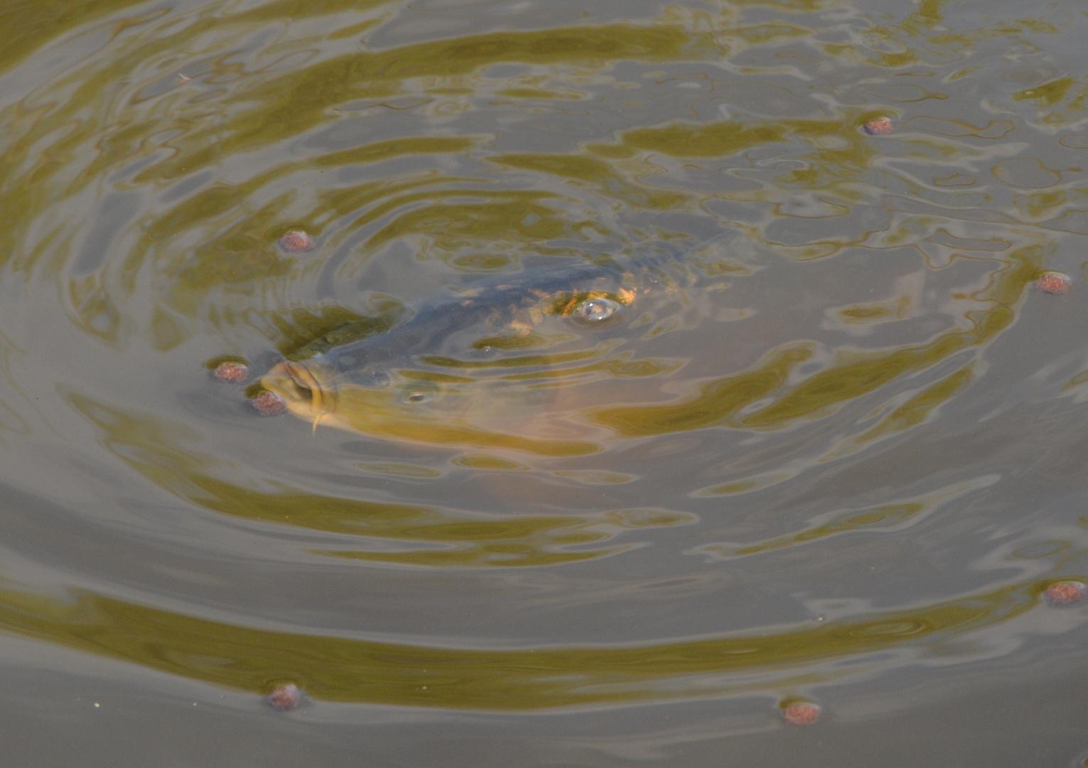 bei uns im Teich