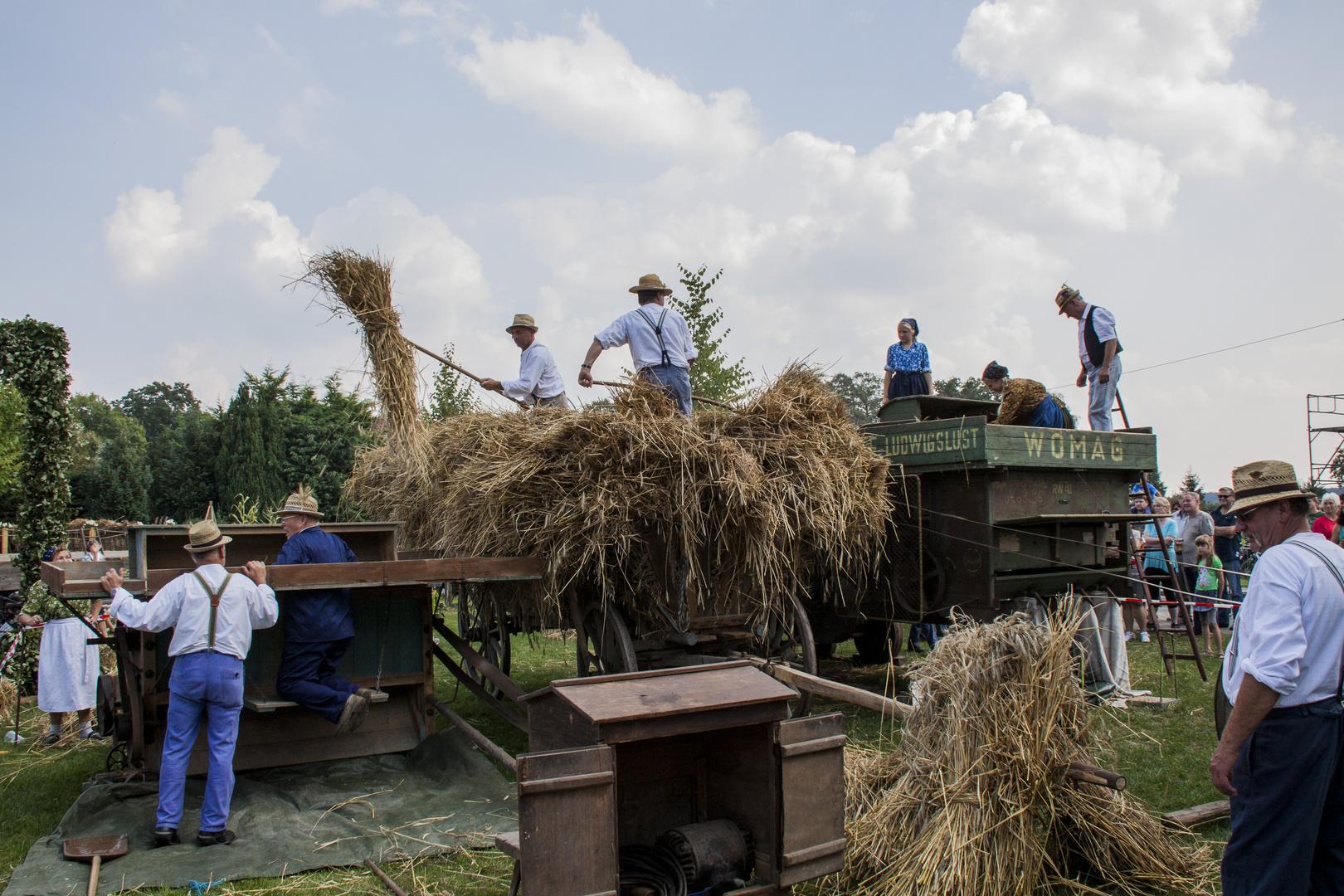Beim Dreschen von Getreide