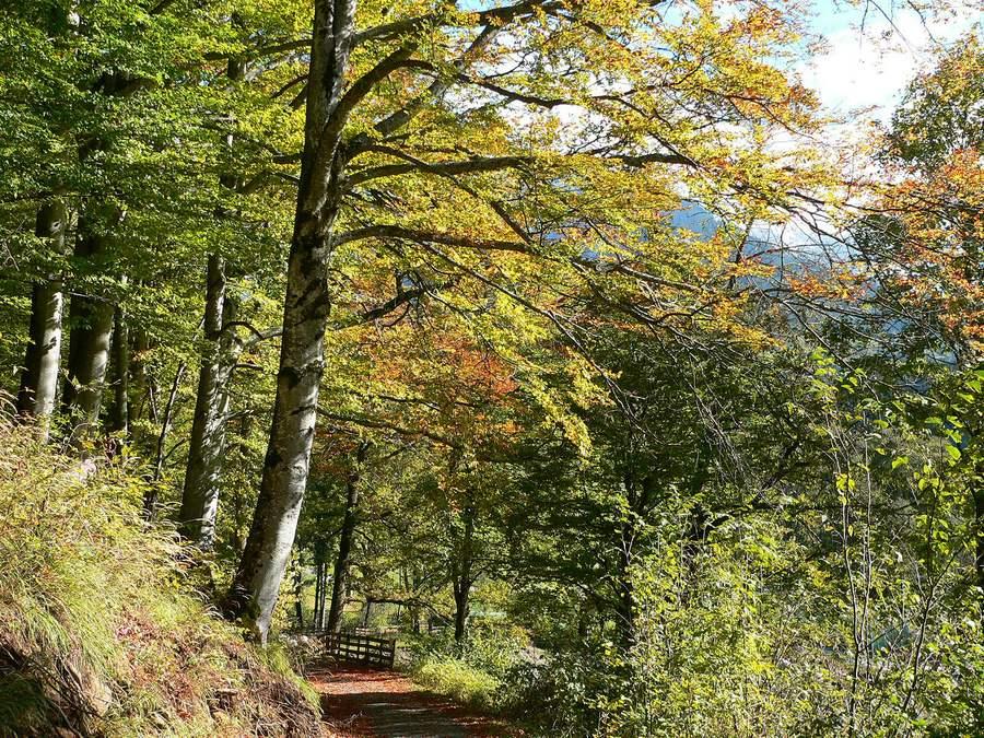 Beim Herbstspaziergang