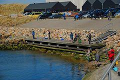 Beim Heringsangeln in Thorsminde (Midtjylland, DK)