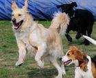 Beim Hunde Freilauf