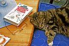 Beim Lesen eingeschlafen...