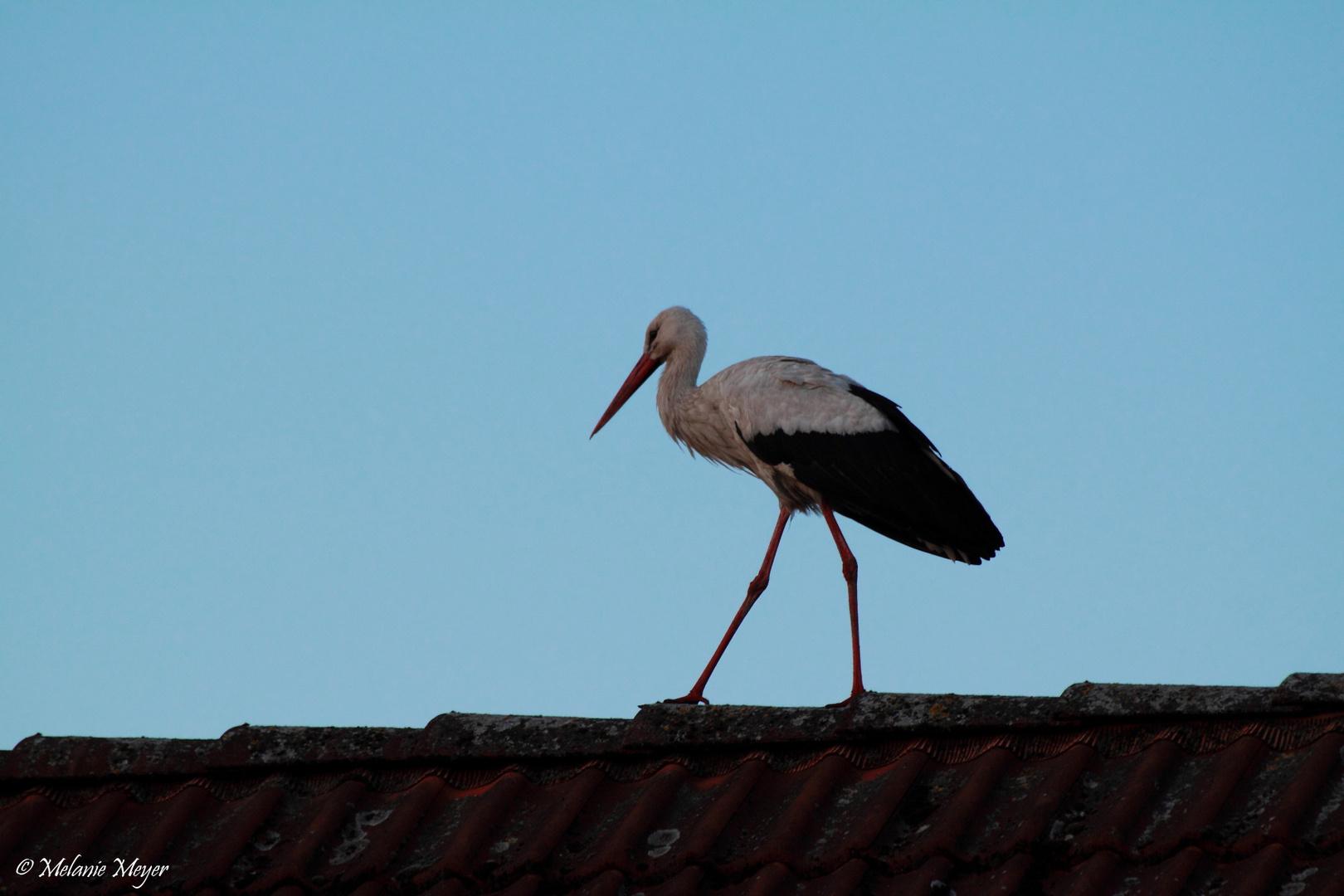 Beim Nachbarn aufm Dach