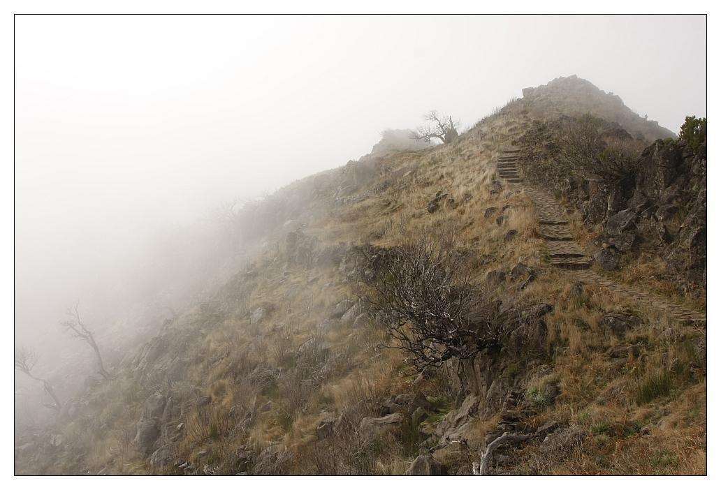 Beim Pico Ruico, Madeira (1)