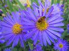 Beim Pollen suchen
