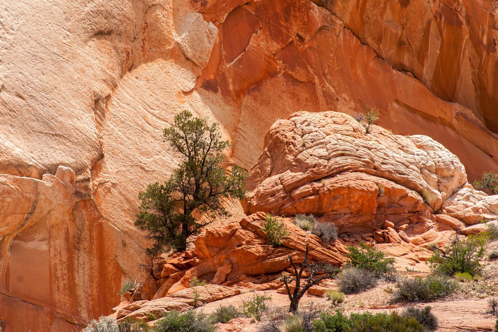 beim Red Top, Yellow Rock Area, Grand Staircase Escalante NM, Utah