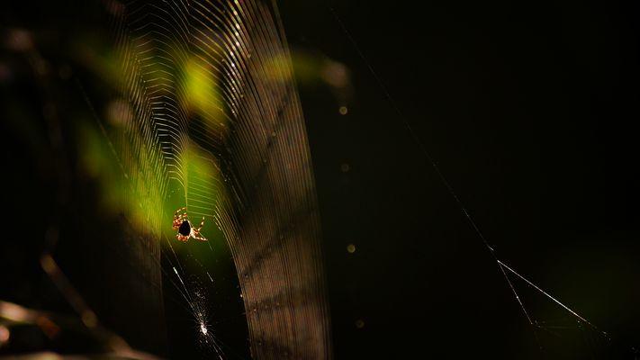 beim spinnen