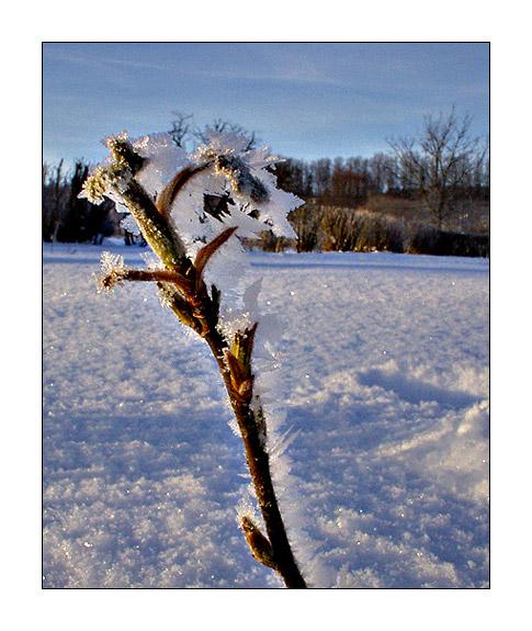 Beim Winterspatiergang #2