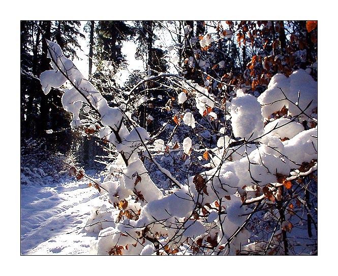 Beim Winterspaziergang #3