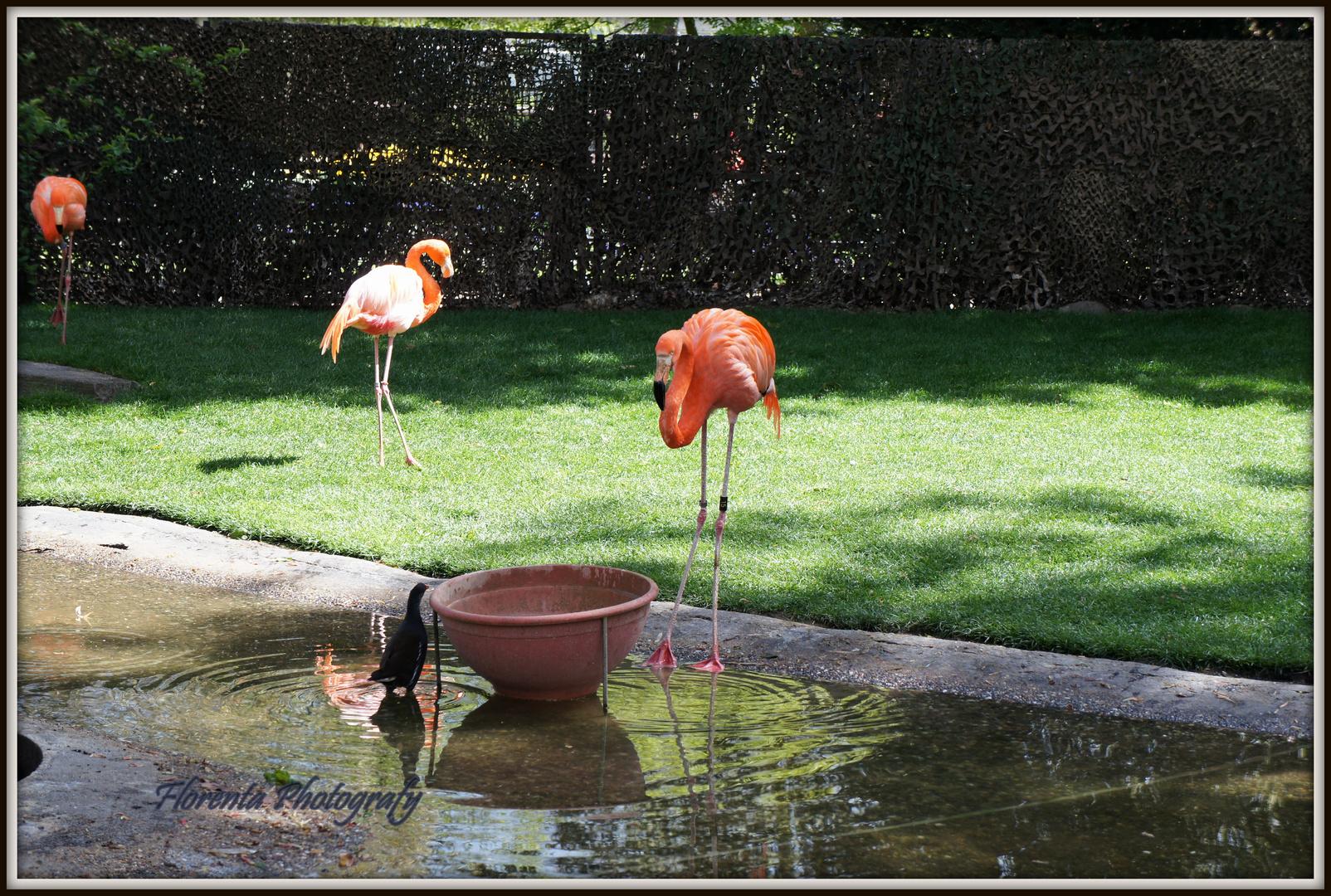 Beim Zoo