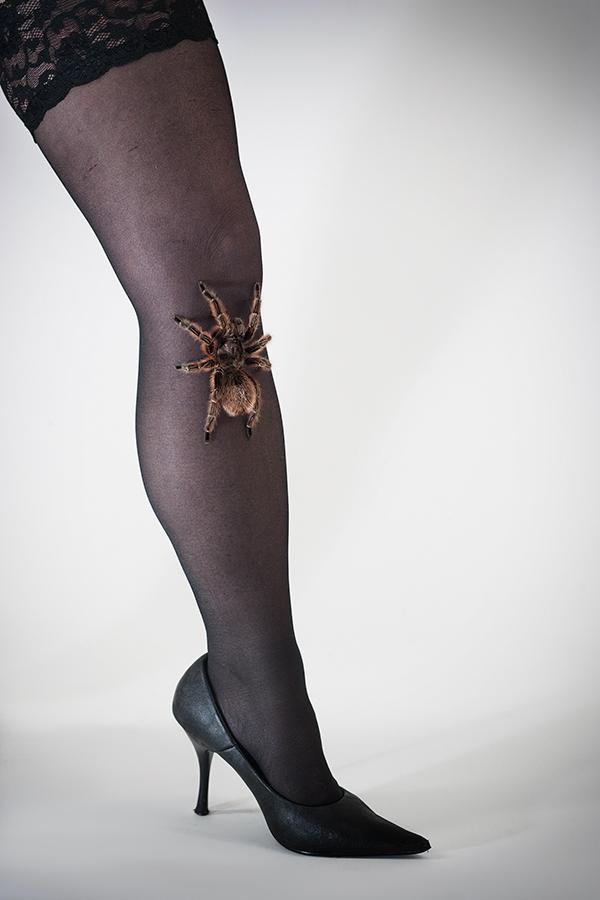 Beinspinne