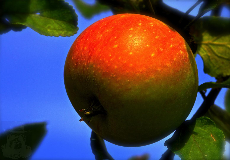 Beiß nicht gleich in jeden Apfel, denn er könnte ... ...