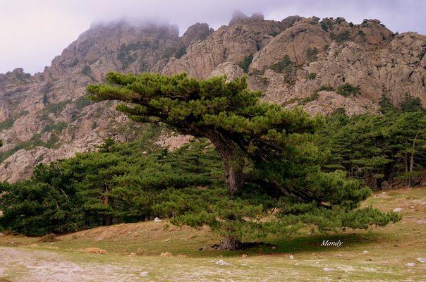 bel arbre ..