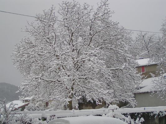 Bel arbre village de Cier de Rivière en Comminges