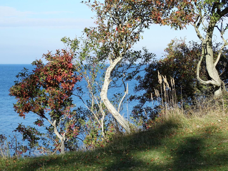 Æbelø im Herbst