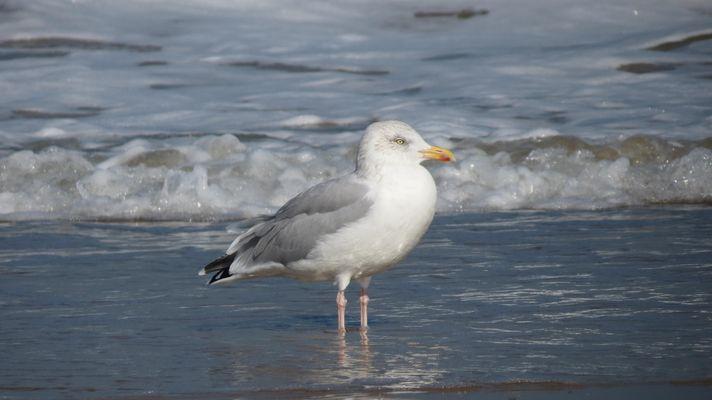 Bel oiseau de la mer