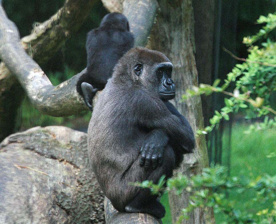 beleidigte leberwurst foto bild tiere zoo wildpark falknerei s ugetiere bilder auf. Black Bedroom Furniture Sets. Home Design Ideas