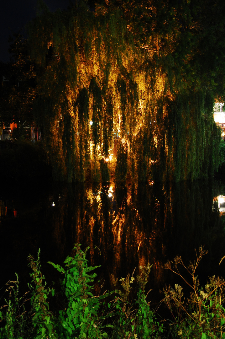 Beleuchteter Baum an der bocholter Aa