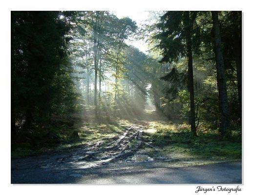 Belgium Ardennes