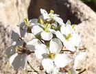 bella flor de invierno&hormigas