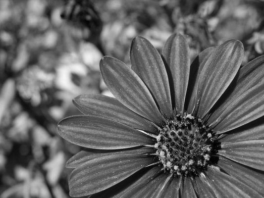 Bella in bianco e nero