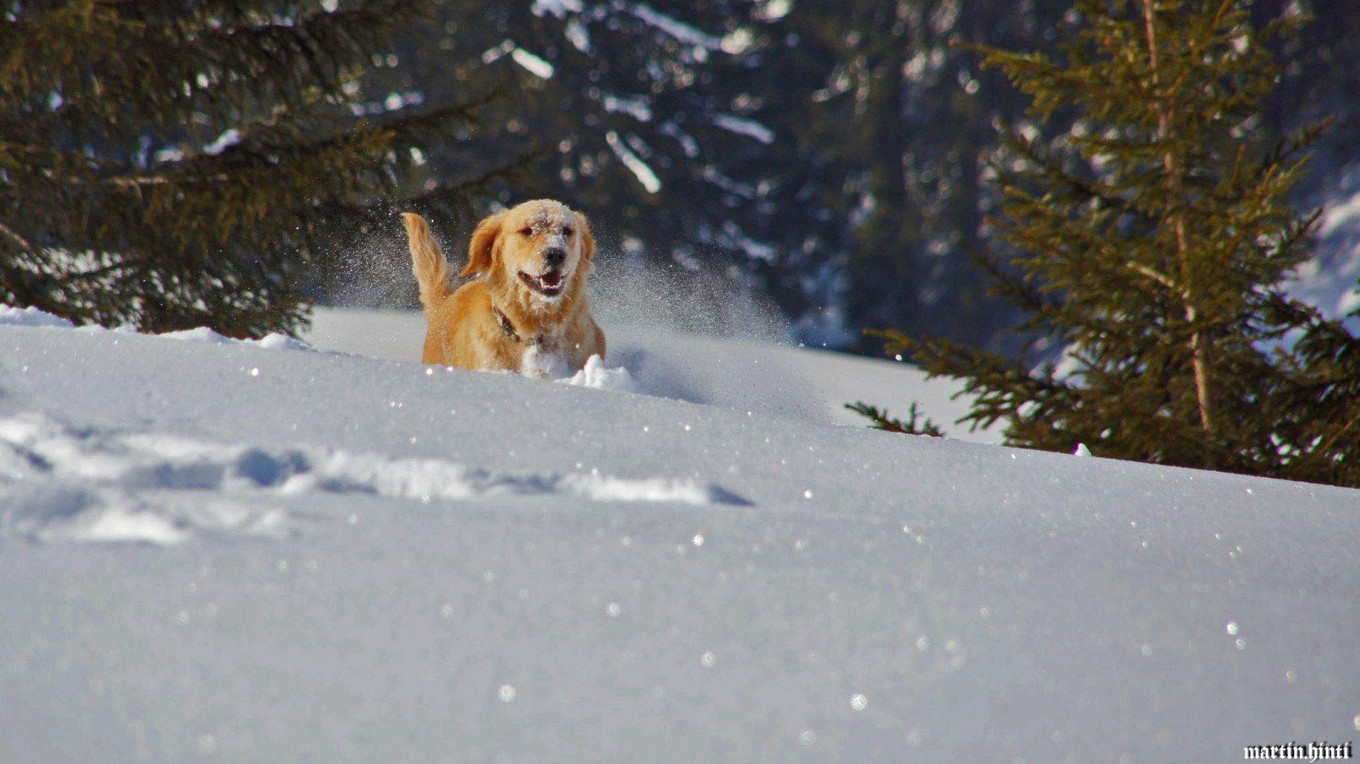 Bella mag den Schnee