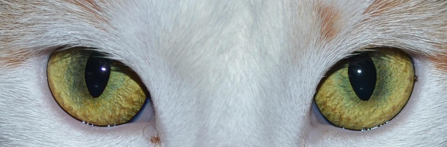 Bellas Augen