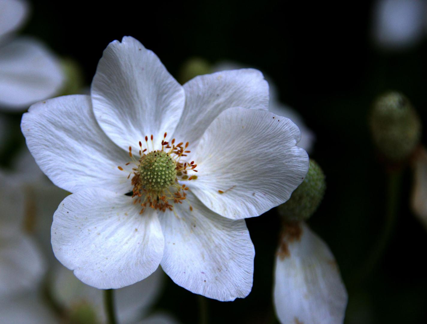 Belle du jardin