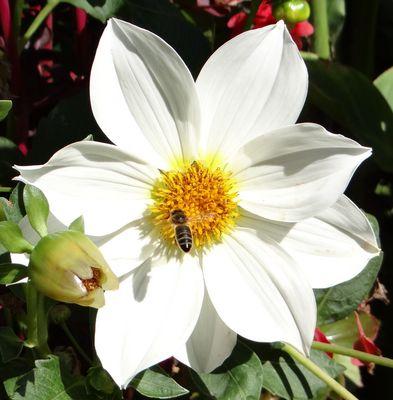 Belle Fleur et son Adoratrice
