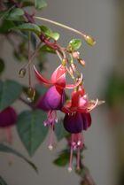 ?? Belle plante.