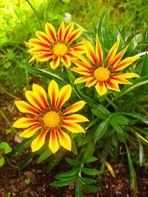 Belle plante 2