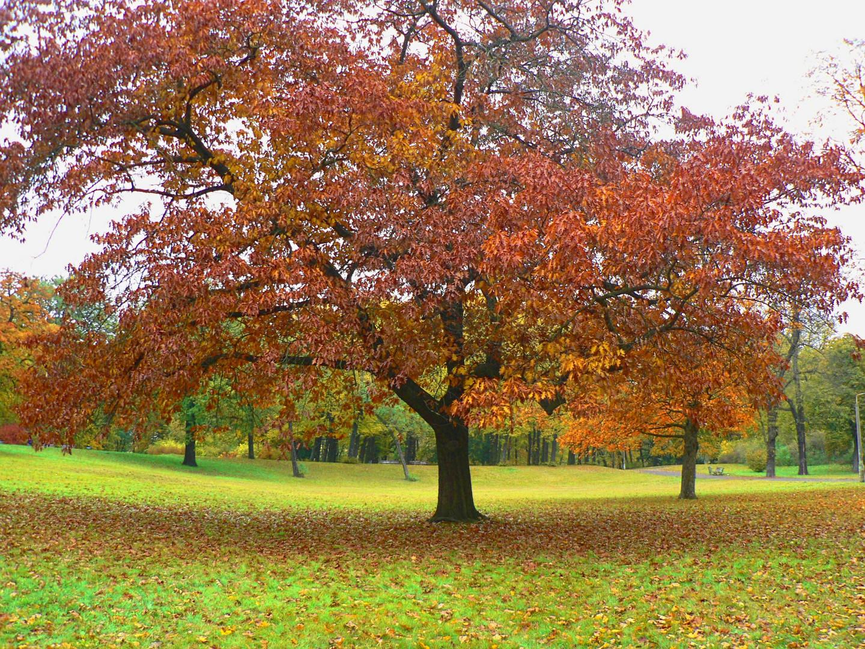 Bellevue Park in Autumn