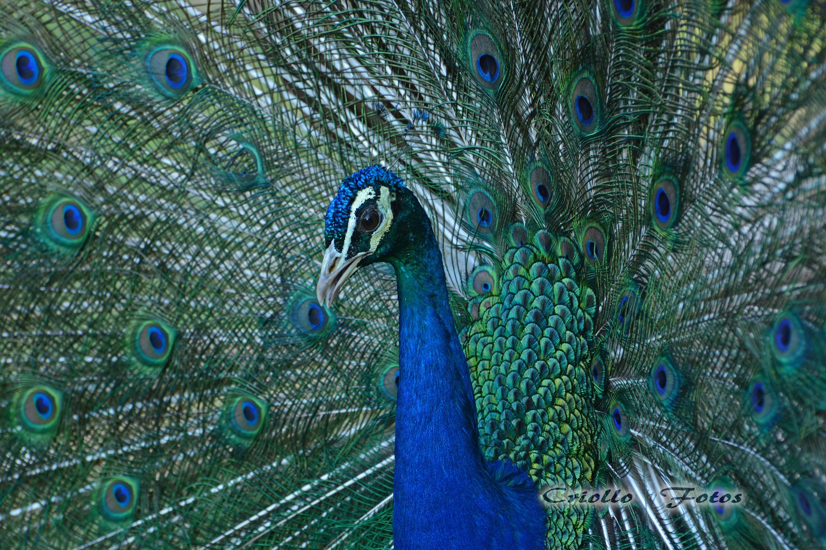 belleza animal