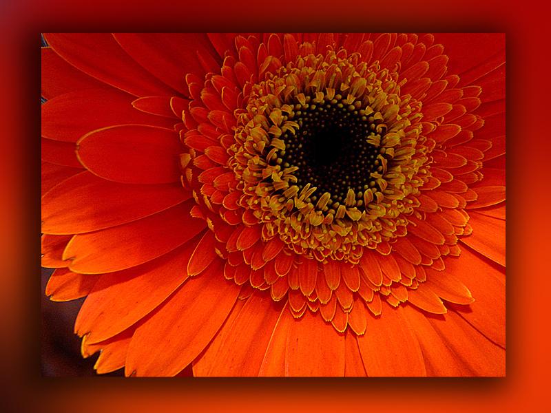 belleza naranja