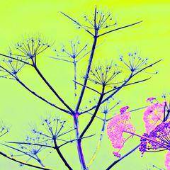BELLEZZA SICILIANA - primavera