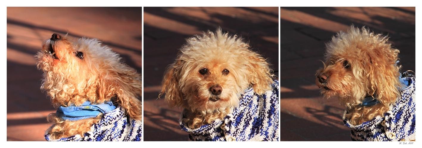 Bello, der sprechende Hund