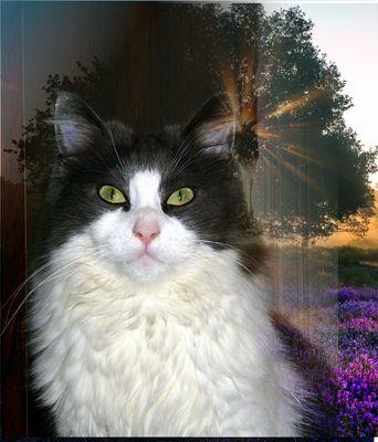 Bello mon chat au printemps
