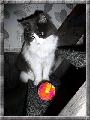 Bello mon chat et la balle rouge
