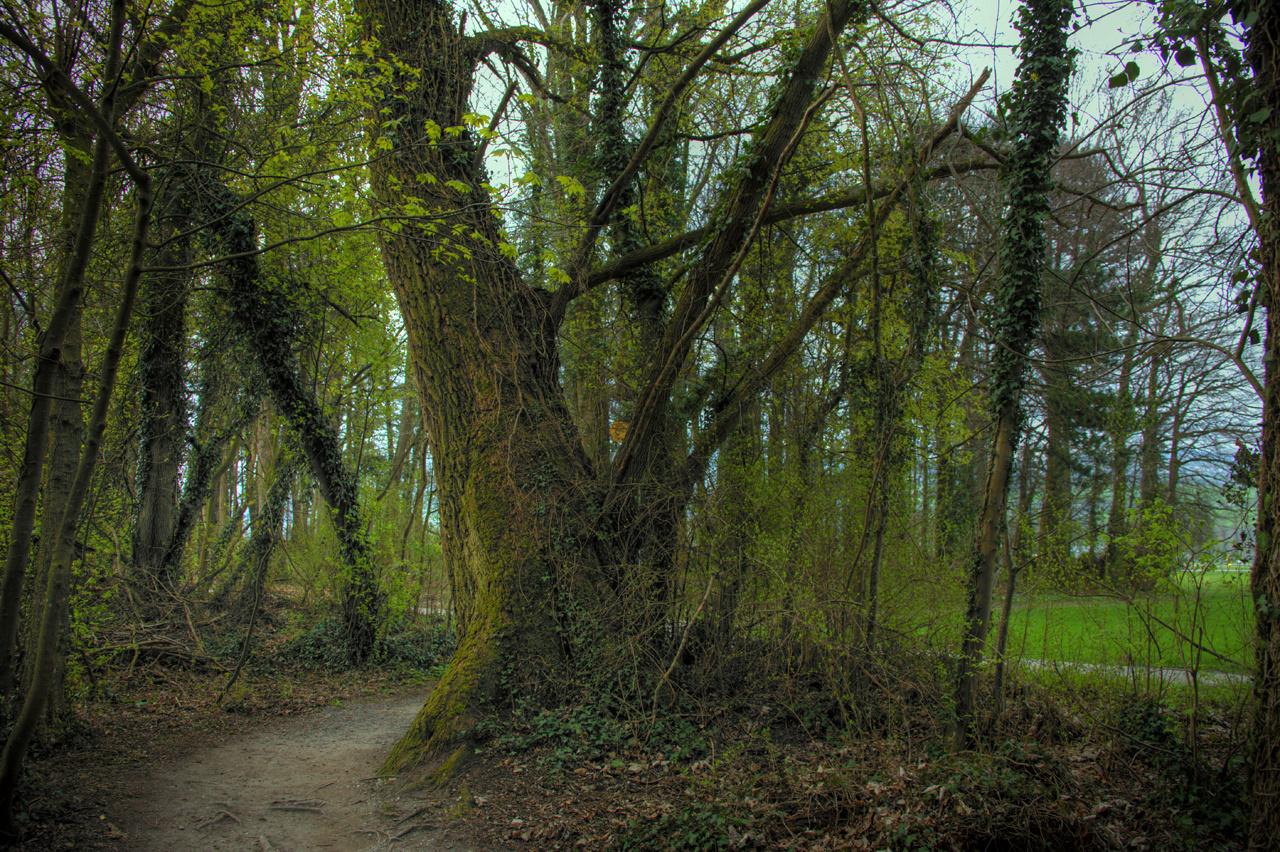 Bemooster Baum