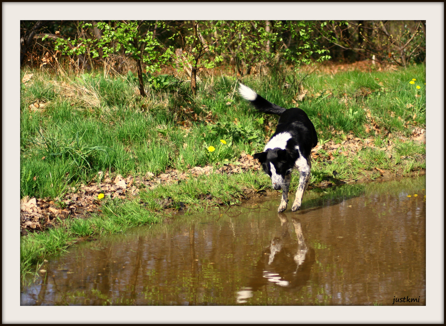 Ben, le border collie flotteur