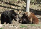 Ben, Poldi und Schapi im Alternativen Bärenpark Schwarzwald