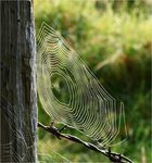 Benetztes Netz