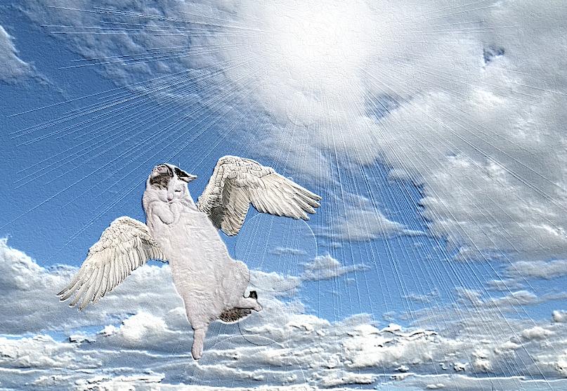 (B)engelchen