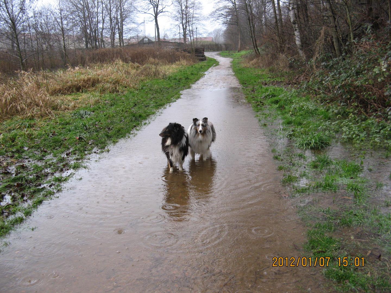 Benji und Merlin am alten Bahndamm