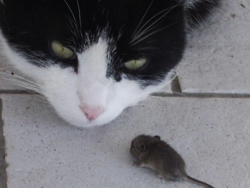 Benno und die Maus